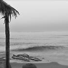Windansea Dawn by deepbluwater