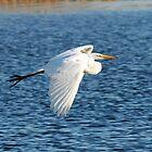 Great Egret in flight by jozi1