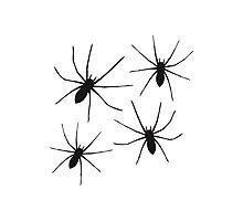 Spider Pattern Photographic Print