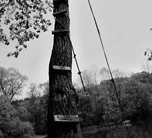 The Climb by Nick Scott