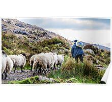 Lamb Pride Poster