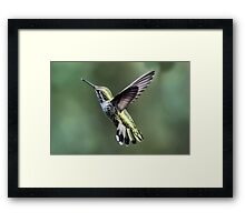 Tale of the Feathers Framed Print