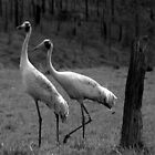 BROLGA COUPLE by Barbara  Jean