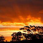 Tree Line Silhouette 2 by jwwallace
