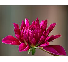 Flower of August Photographic Print
