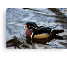 Colorful Forest Jewel - a Wood Duck in a Secluded Lake Canvas Print