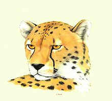 Portrait of a Cheetah by HandsonHart