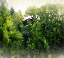 Great Blue Heron Flying Past the Trees Above Trojan Pond by Dawna Morton