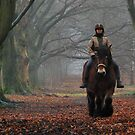 Riding under old trees on a misty day by jchanders