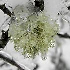 Frozen Lichen by Martha Medford