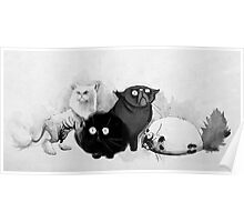 Persian cats Poster
