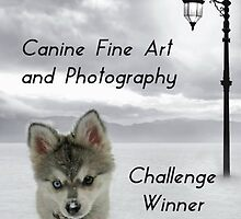 Challenge Winner Banner Canine Fine Art and Photography by Staffaholic