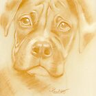 Boxer - original pastel drawing by Paulette Farrell