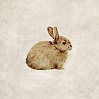 Vintage Rabbit Study in Watercolour by Lisa Marie Robinson