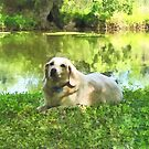 Yellow Lab by Lake by Susan Savad