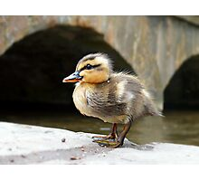 Little Quack ! Photographic Print