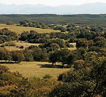 Santa Rosa Plateau by Robert W.  Feuerstein