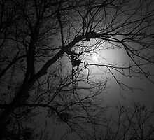 Spooky Moon by Carol Bailey White