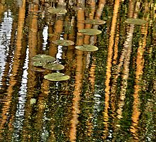 Orange Bamboo Abstract, Reflection on Water by ibadishi