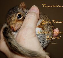 BANNER ... Squirrels, Chipmunks & Relatives by AnnDixon