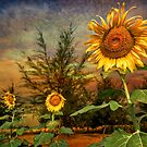 Three Sunflowers by Adrian Evans