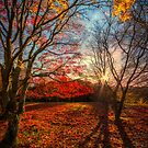 Autumn Shadows by Adrian Evans