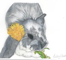 Dandelion The Rabbit by Lesley Clarke