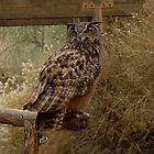 Eagle Owl.... by DonnaMoore