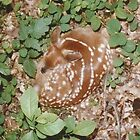 Fawn Caught Sleeping unframed by gt6673