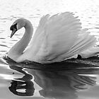 I am a Swan  by Martina Fagan