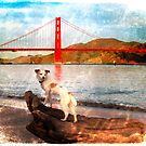 San Francisco Sam by Myillusions