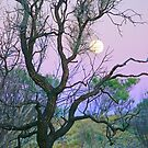 Outback Moon by Harry Oldmeadow