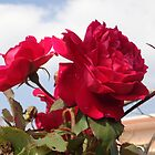 Fellow Roses by Shubham Chugh