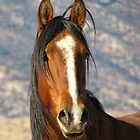 """Big Daddy"" Wild Stallion of the Virginia Range by Ellen  Holcomb"