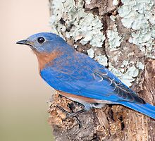 The Bluebird Carries the Sky on His Back by Bonnie T.  Barry