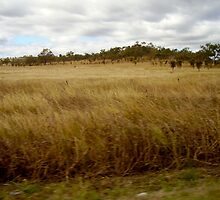 Somewhere on the Road between Makay and Townsville. Very Dry and Hot by MardiGCalero