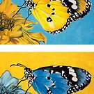 Pop Art Butterflies by Jennifer Gibson