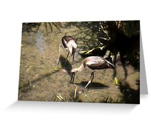 Foraging inShallows Greeting Card