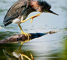Green Herons by Heron-Images