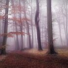 Foggy Woods by Photokes