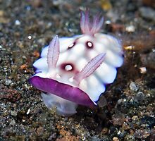 Lumpy Chromodoris by Mark Rosenstein