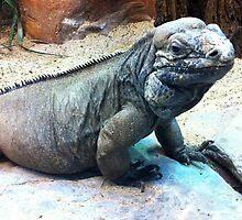 Iguana by Charlotte  Wells