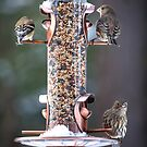 Busy Day at the Feeder by Mikell Herrick