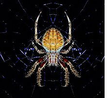 Spider in Web by TaffyTrotski