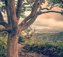 Waihee Ridge Trail Maui Hawaii by Edward Fielding