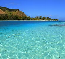 Moorea Island - Coral Reef and Reef Sharks by Honor Kyne