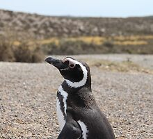 Magellanic Penguin At Punta Tombo by Harald Ole Hansen