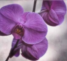 Passionately Purple by Dorothy  Pinder