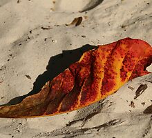 Fallen leaf on beach, Koh Somet, Thailand by indiafrank