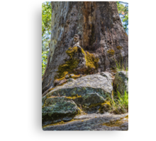 One of Nature's Wonders Canvas Print